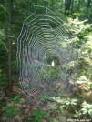 Spiderweb by Pokey2006 in Other