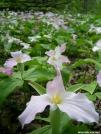 Flowers in Tennessee by Pokey2006 in Flowers