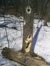 Woodpeckers??? by Pokey2006 in Birds