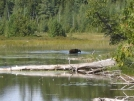 IMG_0140 by bulldog in Moose
