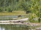 IMG_0141 by bulldog in Moose