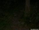 Timber Rattlesnake by Alligator in Snakes
